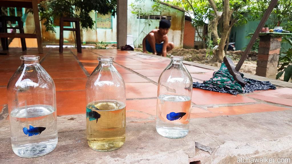 Jolis poissons ! - Delta du Mékong.
