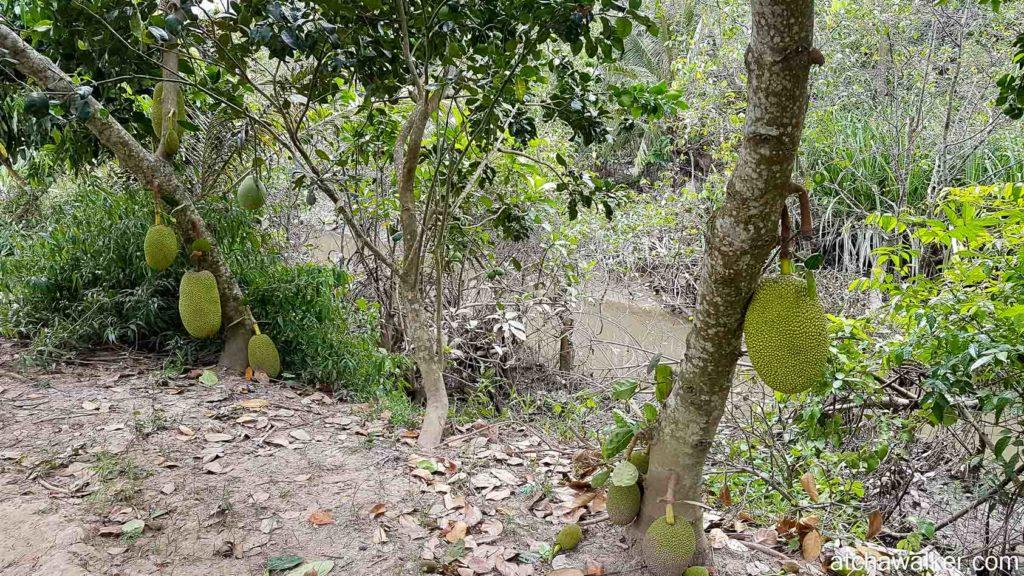 Les fameux durians - Delta du Mékong.
