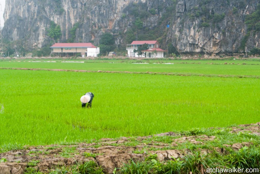 Et encore du riz! - Ninh Binh