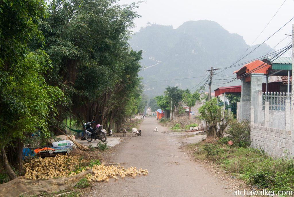 Coin-coin - Ninh Binh