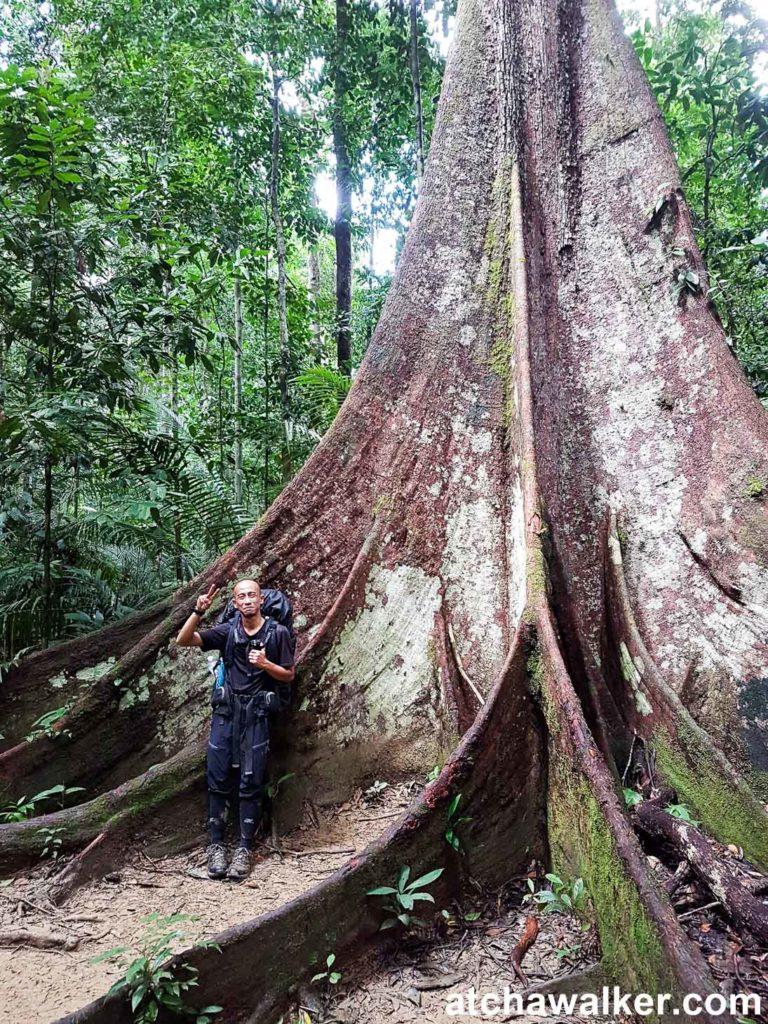 Ajip, notre guide passionné ! - Taman Negara - Malaisie