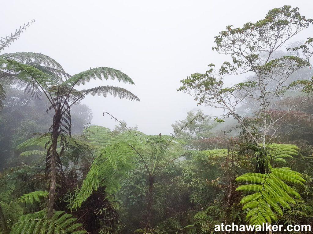 Comme tu peux le voir, une météo au top! - Cameron Higlands - Malaisie