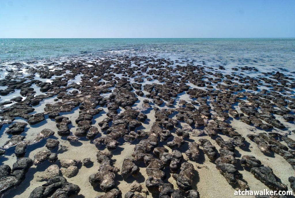 Hamelin Pool Marine Nature Reserve - Shark bay